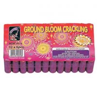 CRACKLING GROUND BLOOM - PACK OF 6